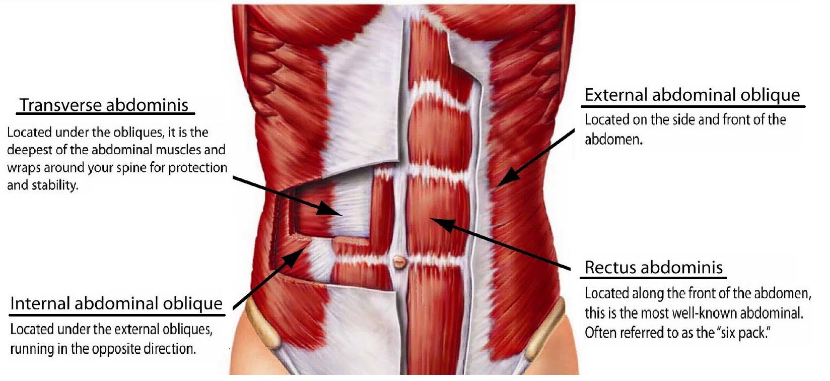 Как накачать боковые мышцы пресса 31